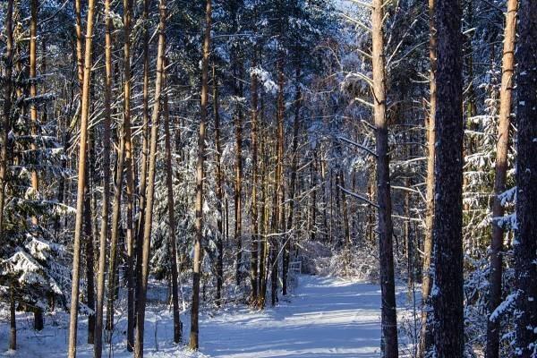 Zákaz vstupu do lesů